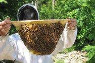 Το μέλι