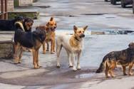Πάτρα: Αδέσποτα σκυλιά κάνουν επιθέσεις σε κατοίκους στο Σαραβάλι