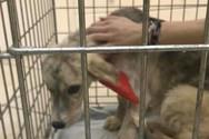 5.000 ευρώ και 15 μήνες φυλάκιση με αναστολή για κακοποίηση σκύλου
