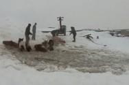 Εντυπωσιακή διάσωση αλόγων που έπεσαν σε παγωμένα νερά ποταμού (video)
