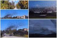 Αχαΐα: Ψαρόνια «χορεύουν» με μαεστρία πάνω από τα σπίτια (video)