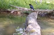 Πόσα είδη ζώων πέρασαν από αυτόν τον κορμό δέντρου μέσα σε ένα χρόνο; (video)
