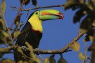 Ανακαλύψτε τα όμορφα, εξωτικά πτηνά της Κόστα Ρίκα