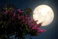 Έρχεται το πρώτο φωτεινό φεγγάρι της Άνοιξης