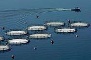 Πρόσθετα μέτρα στήριξης σε αλιείς και υδατοκαλλιέργειες
