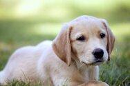 Γιατί λατρεύει ο σκύλος τη ρουτίνα