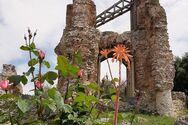 Πάτρα - Όταν το Ρωμαϊκό Υδραγωγείο συναντά τη μαγεία της Άνοιξης (φωτο)