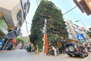 Πενταώροφη πολυκατοικία καλύπτεται από αναρριχώμενα φυτά