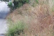 Πάτρα: Σε κακή κατάσταση ο δρόμος της Αγίας Ειρήνης στον Ριγανόκαμπο (φωτο)
