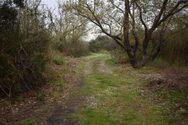 Πάτρα: Κανένα βήμα εμπρός, εδώ και τρία χρόνια, για το Πλατανόδασος στο Προάστιο