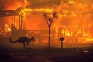 Αυστραλία - Ο καπνός από τις πυρκαγιές ευθύνεται για εκατοντάδες θανάτους