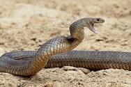 Πάρος - Έβαλε φωτιά για να διώξει φίδι και έκαψε λιβάδι