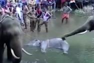 Ινδία: Οργή για το φρικτό θάνατο εγκύου ελεφαντίνας - Έφαγε φρούτα παγιδευμένα με κροτίδα (video)