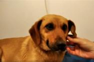 Καταγγελία: 85χρονος βίασε σκυλίτσα σε ορεινό χωριό της Αιγιαλείας!