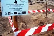 Οι πρώτες φωλιές για φέτος Caretta - caretta στη Στροφυλιά είναι γεγονός (φωτό)