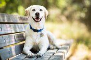 Έρευνα: Ποιοι σκύλοι κινδυνεύουν περισσότερο να πάθουν θερμοπληξία το καλοκαίρι
