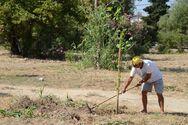 Πάτρα: Συνεχίζονται οι εργασίες στο Πλατανόδασος από τον δήμο (φωτο)