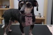 Χάθηκε σκυλάκι στην ευρύτερη περιοχή του κέντρου της Πάτρας