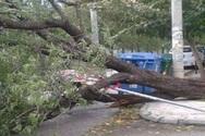Πάτρα: Πτώση δέντρου στην οδό Μαξίμου