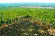 Βραζιλία - Καταστροφή ρεκόρ του τροπικού δάσους του Αμαζονίου