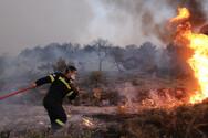 Δυτική Ελλάδα: Έρευνες για τα πύρινα μέτωπα στην Ηλεία