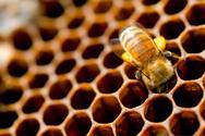 Το βουητό από τις μέλισσες είναι το καλύτερο αγχολυτικό για τους Σλοβένους