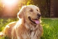 Βρετανία: Πιθανόν στο Κεντ το πρώτο σκυλί με Covid-19