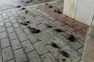 Χαλκίδα: Eκατοντάδες νεκρά πουλιά στην παραλία