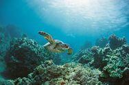 Η κλιματική αλλαγή οδηγεί θαλάσσια οικοσυστήματα σε «αόρατη μετανάστευση»