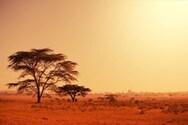 Η Αφρική χωρίζεται στα δύο και γεννιέται ένας νέος ωκεανός (video)