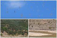 Εντυπωσιακό θέαμα - Σμήνος γλάρων πετά πάνω από τον ποταμό Σελινούντα (video)