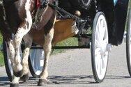 Κάτω Αχαΐα: Κατέσχεσαν άμαξα και άλογα που προορίζονταν για γάμο