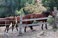 Γαλλία: Δολοφονούν και ακρωτηριάζουν άλογα - Μυστήριο και ανησυχία για τις απανωτές επιθέσεις