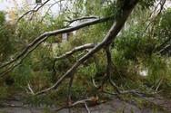 Πτώσεις δέντρων και διακοπές ηλεκτροδότησης λόγω κακοκαιρίας στην Κέρκυρα