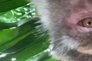 Μαϊμού έκλεψε κινητό και άρχισε να βγάζει selfies (video)
