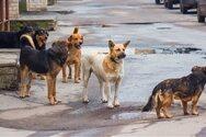 Δυτική Αχαΐα: Συνεδρίασε η 5μελής του Δήμου με τα Σώματα Ασφαλείας για αδέσποτα και δεσποζόμενα