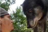 Φροντιστής ζώων παίζει με λύκο