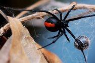 Μαρία Χατζάκη για μαύρη αράχνη: