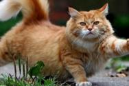Οι γάτες μεταδίδουν μεταξύ τους τον κορωνοϊό, ενώ οι σκύλοι όχι