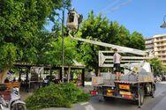 Πάτρα: Συνεργεία του Δήμου προχωρούν σε εργασίες κλαδέματος