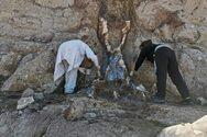 Λέσβος: Νέα ευρήματα απολιθωμένων κορμών
