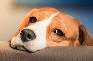 Τι μπορεί να προκαλέσει το έντονο γλείψιμο το σκυλιού στις πατούσες του
