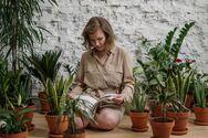 Αυτά φυτά εσωτερικού χώρου καθαρίζουν την ατμόσφαιρα στο σπίτι σας