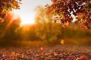 Νέα ανατρεπτική έρευνα για το πότε πέφτουν τα φύλλα του φθινοπώρου
