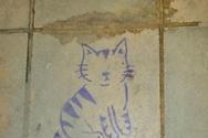 Η γάτα σε τοίχο της Πάτρας που στέλνει μήνυμα ζωής