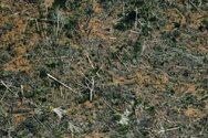 Βραζιλία: Η αποψίλωση του Αμαζονίου έφτασε το 2020 στο υψηλότερο επίπεδό της εδώ και 12 χρόνια