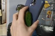 Παπαγάλος ζητάει από τον ιδιοκτήτη του να αφήσει το κινητό με απίστευτο τρόπο