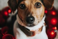 «Raise the Woof»: Αυτό είναι το πρώτο χριστουγεννιάτικο τραγούδι για σκύλους (video)