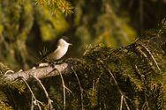 «Click στη φύση!» - Μεγάλος φωτογραφικός διαγωνισμός για την ανάδειξη των περιοχών Natura 2000