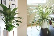 Tips για να «καθαρίσετε» τον αέρα του σπιτιού σας
